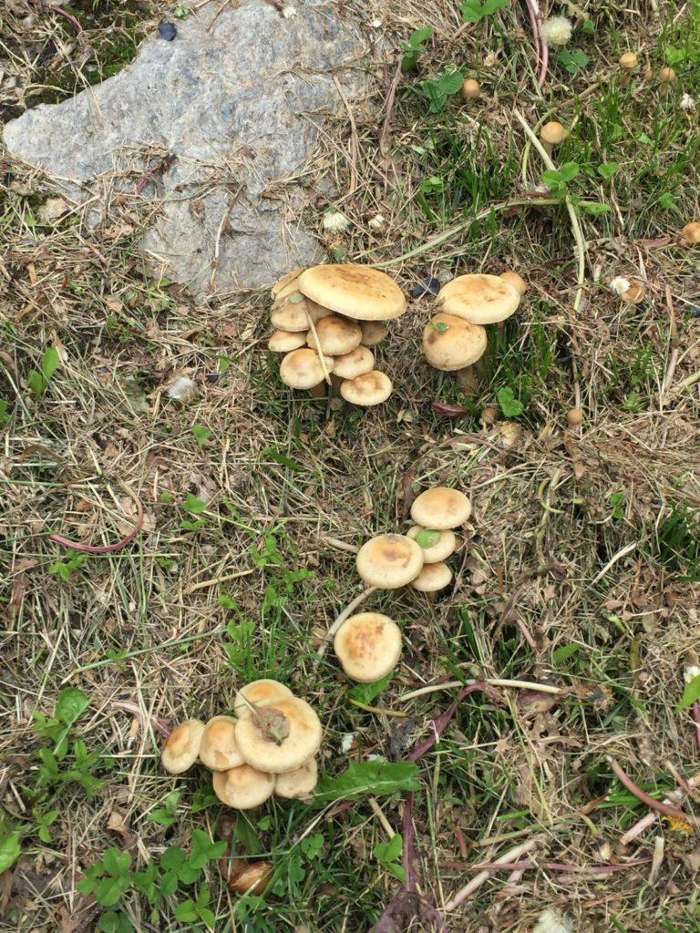 I funghi del bosco